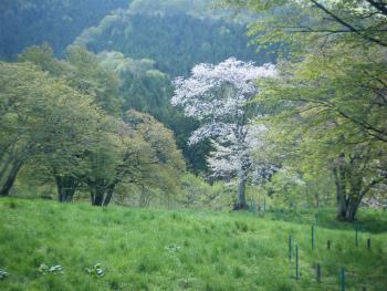 02桜がキレイ.jpg