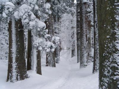06雪の杉並木.jpg