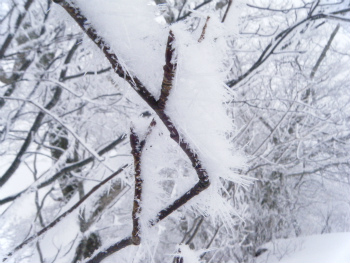 09雪がきれいだ.jpg